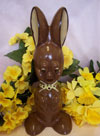 a picture of Buster, a chocolate bunny rabbit