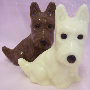 picture white and milk chocolate Westie dogs