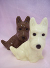 a picture a pair of chocolate Westie dogs